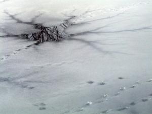 thin-ice-17996_960_720.jpg