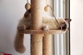 cat tree.jpg