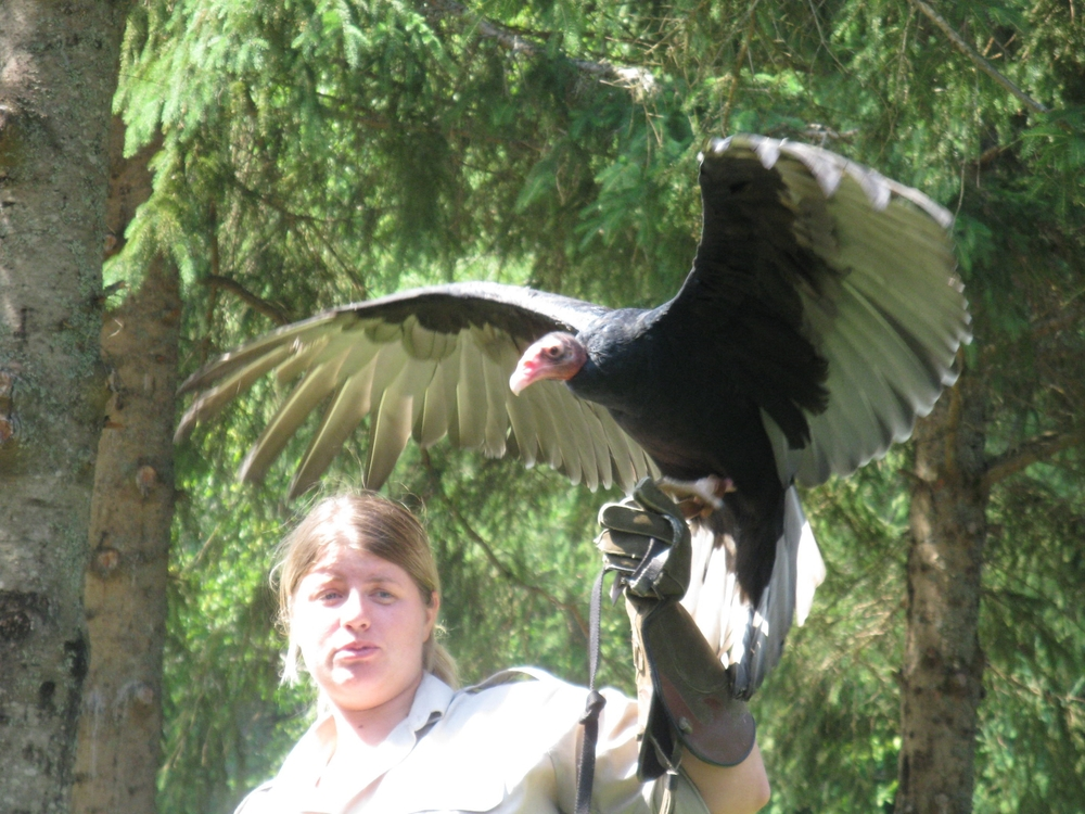 "a turkey vulture named ""Barf"""