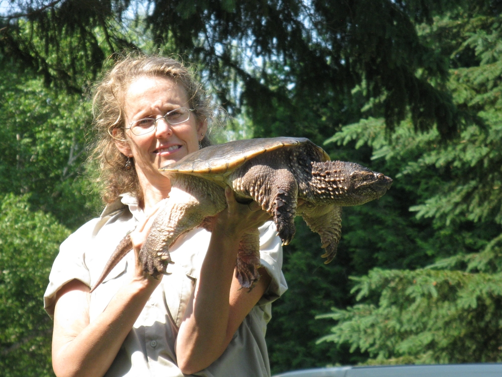 """a snapping turtle named """"Sam"""""""