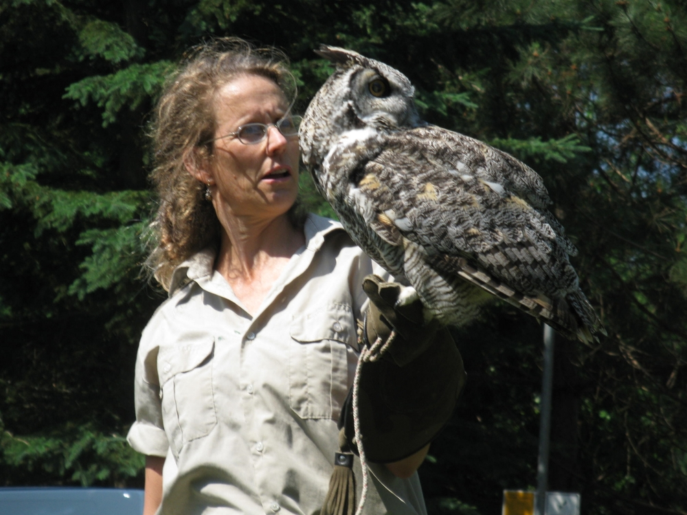 """a great horned owl named """"Dr.Who"""""""