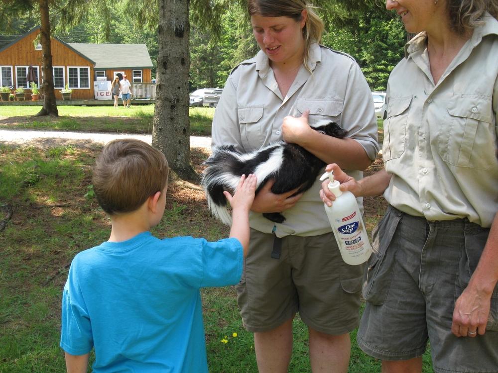 """a skunk named """"Petunia"""""""