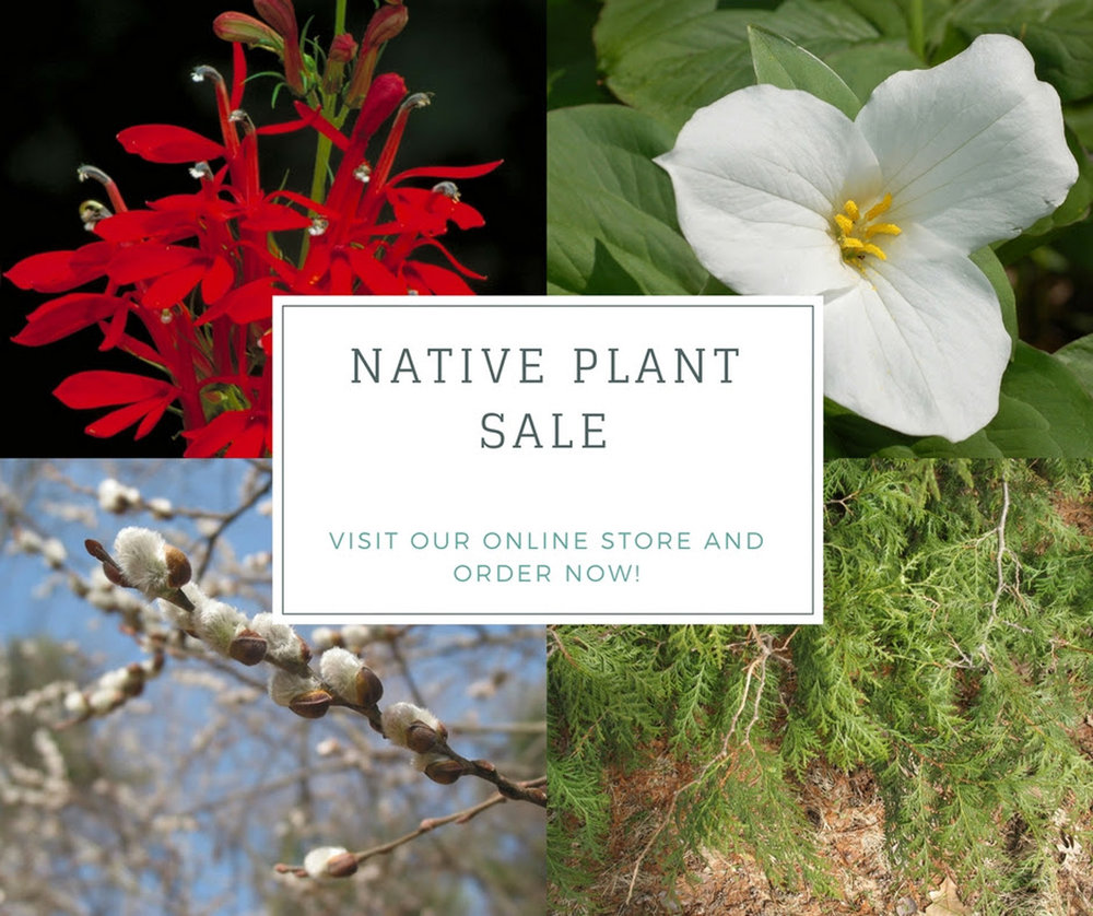 native plant sale.jpg