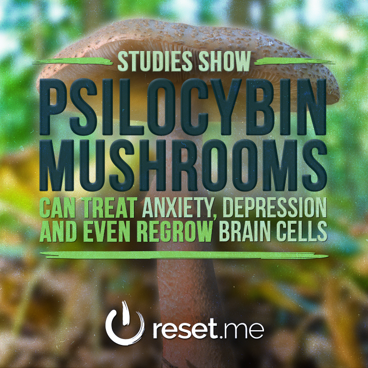 Meme04---Studies-Show-Psilocybin-Mushrooms.jpg