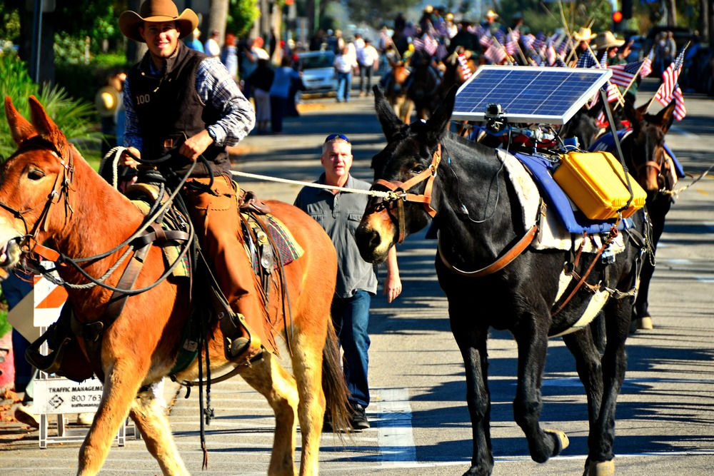 Solar-powered mule? Yes, to run GoPro video cameras on its back