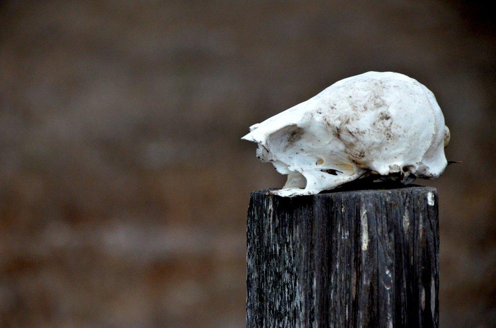 Skull post