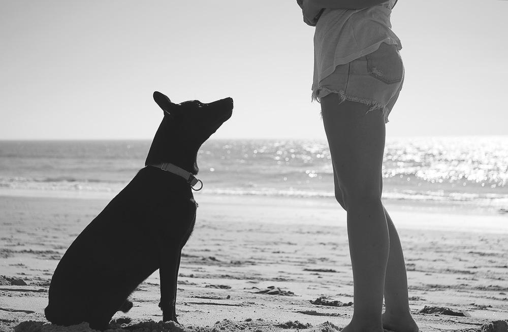 beach_puppy_web.jpg