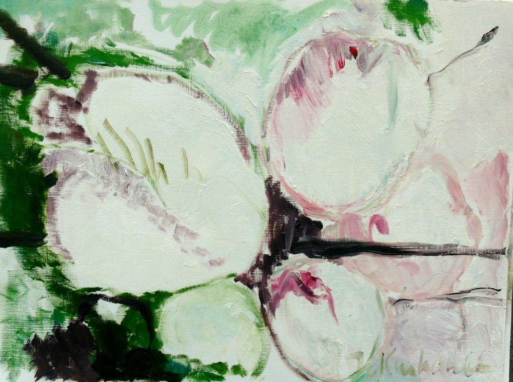 Kirschblüte, cherry blossom