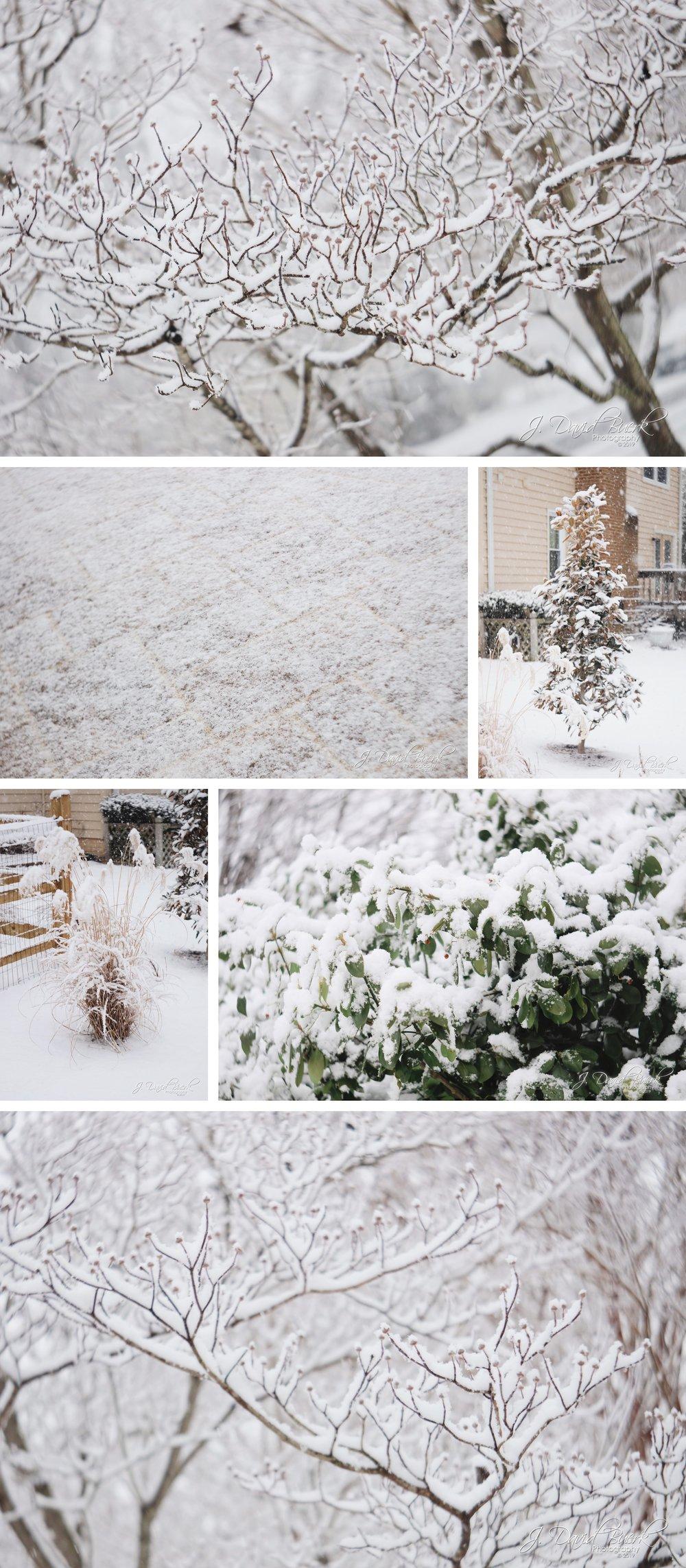 20190129 - Snow Squall 1.jpg