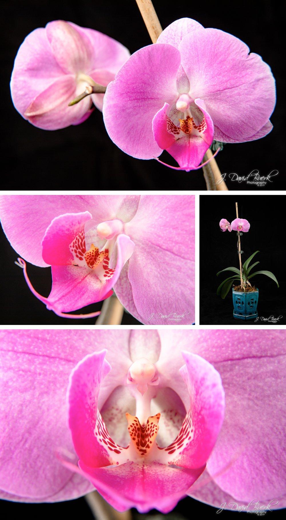 2019 Orchid 1.jpg