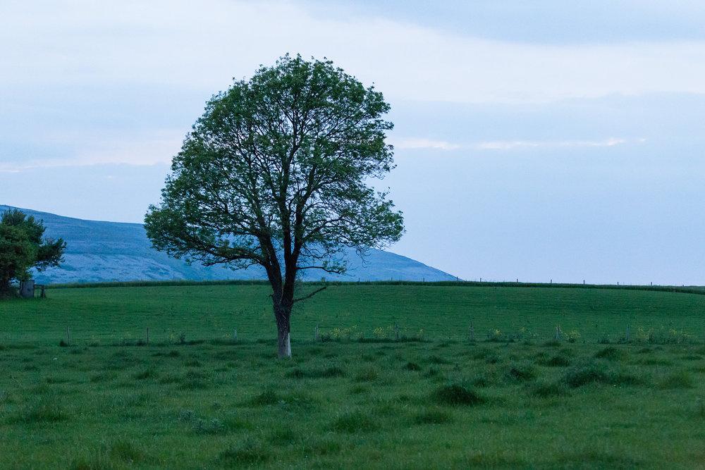 Landscapes-0001-11.jpg