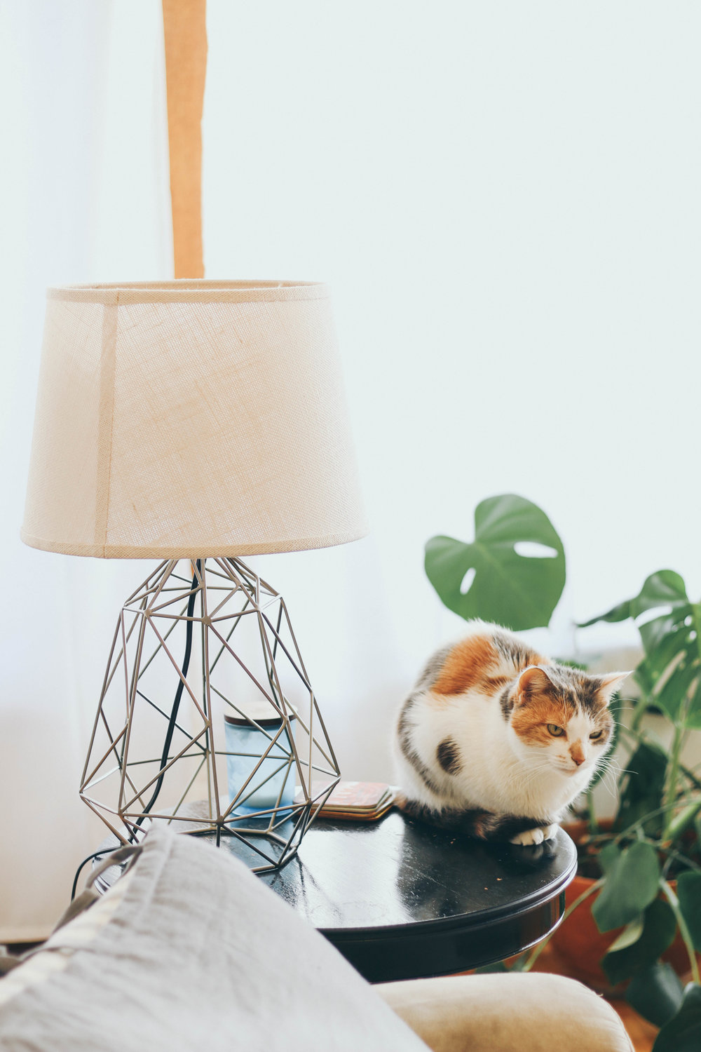 Mimosa just loves to pose for the camera. This neutral geometric lamp + shade I found at  World Market .