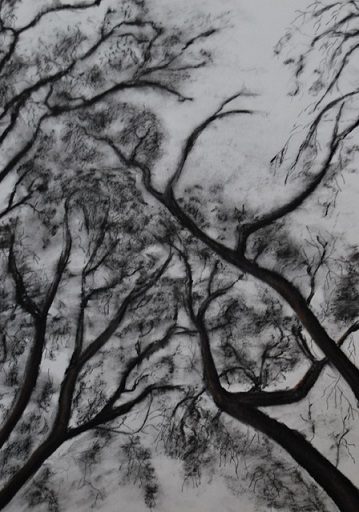 Charcoal on paper, Karen Murrell