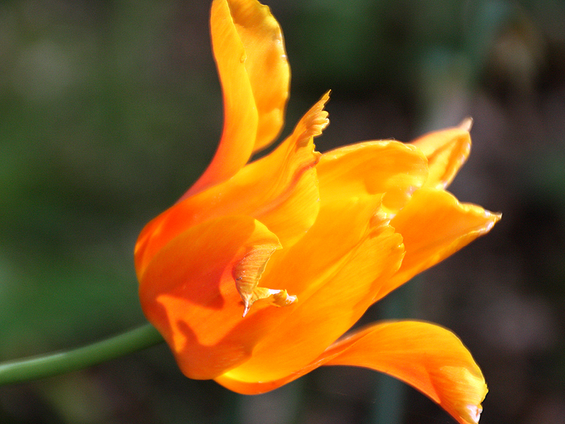Kautzi_Springtime_2.jpg