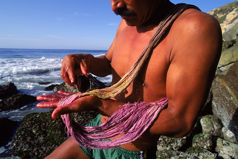 Bernardino Bautista dying cotton using a Purpura patula pansa, a shell fish plucked from the the shore of Cerro Hermoso, Mexico.