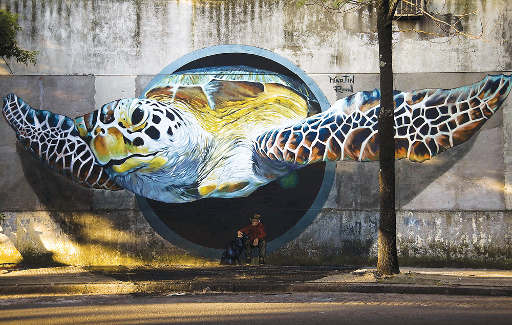 1 Martin Ron sea turtle in Buenos AIres.jpg