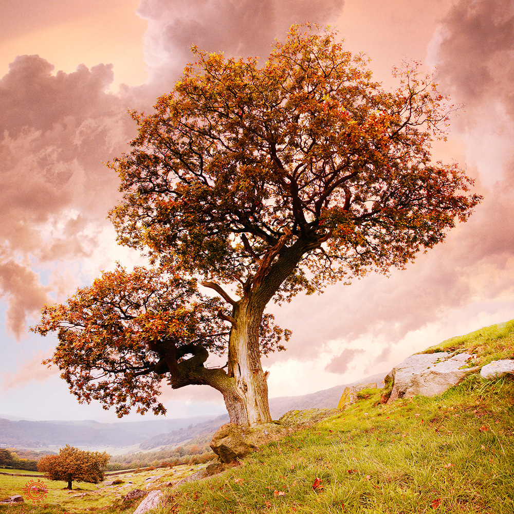 oak tree, derbyshire.jpg
