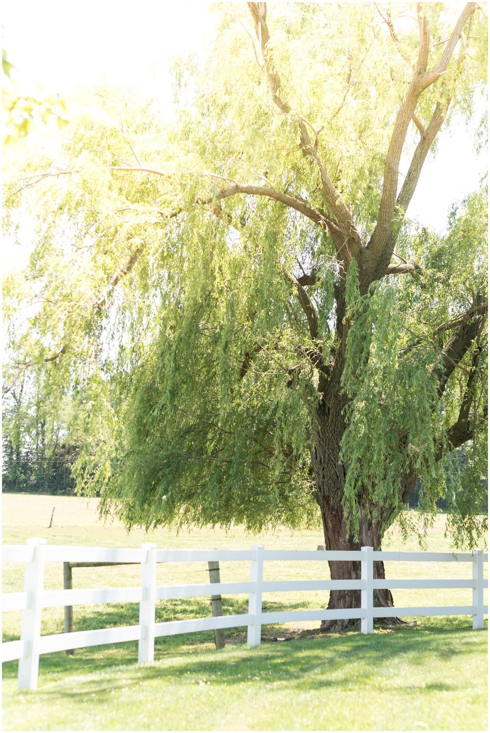 Willow tree at Lancaster pa Farm wedding venue photo