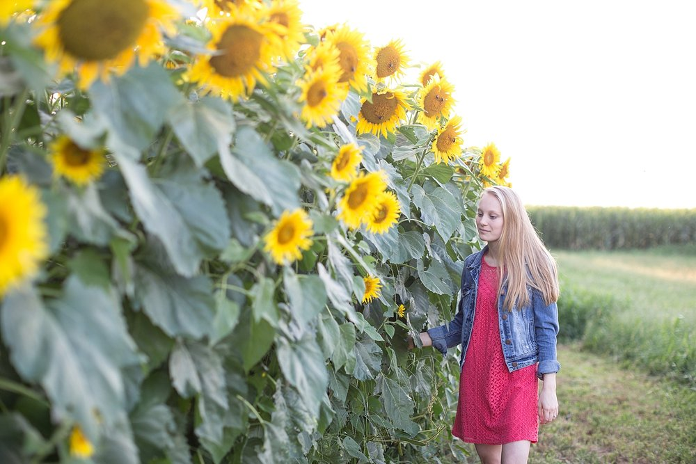 Romantic engagement session in sunflower field lancaster pa wedding photographer photo_0016.jpg