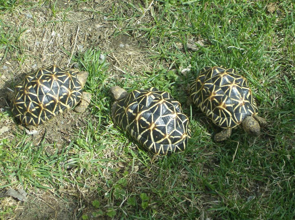 Jers Reptiles 009.jpg