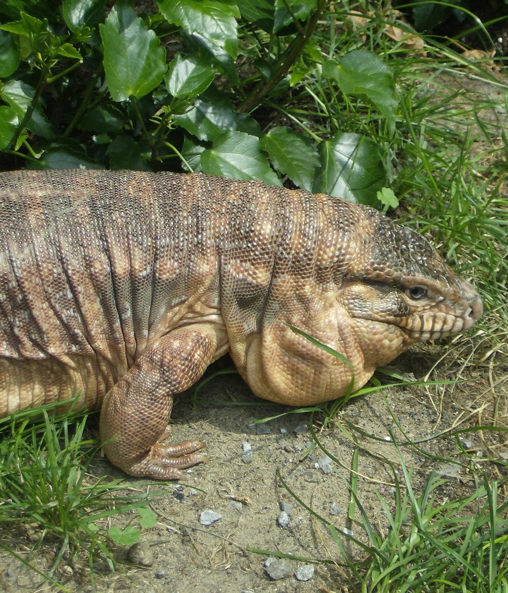 Jers Reptiles 121.jpg