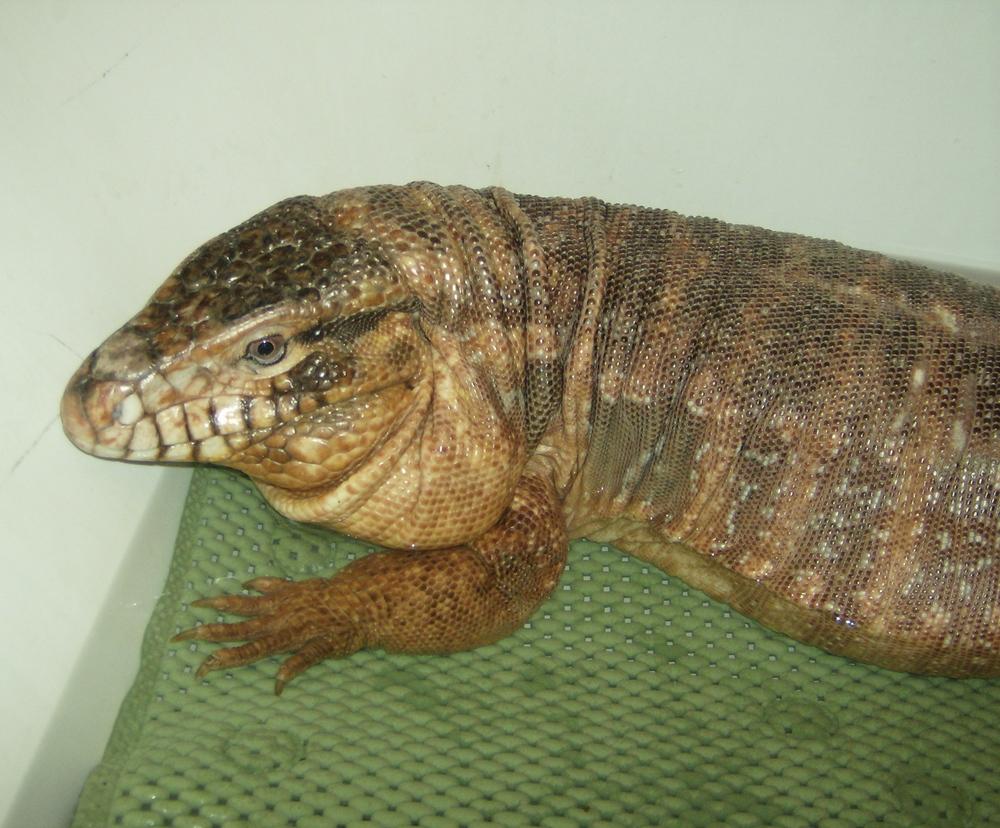 Jers Reptiles 089.jpg