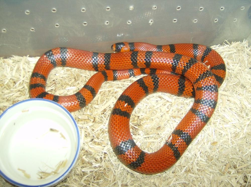 Jers Reptiles 030.jpg