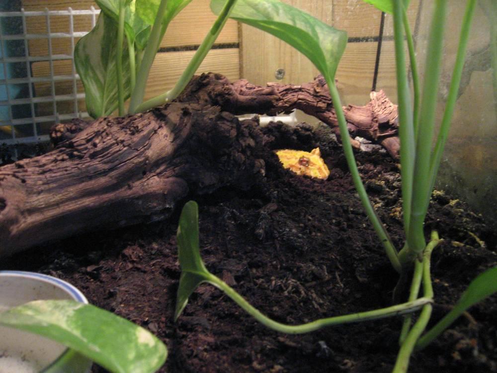 32 - pacman frog.jpg