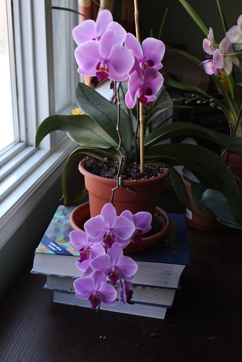 orchid8.jpg