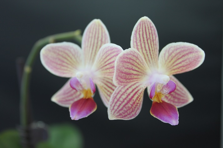 orchid4.jpg
