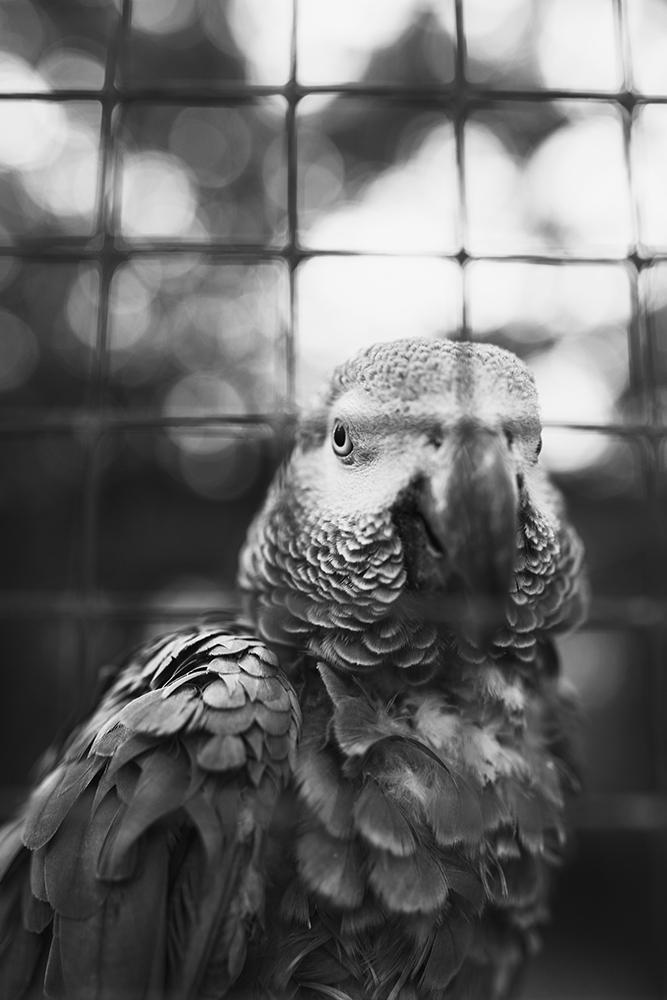 KeownPhoto.Birds-2.JPG