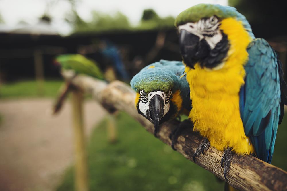 KeownPhoto.Birds-7.JPG