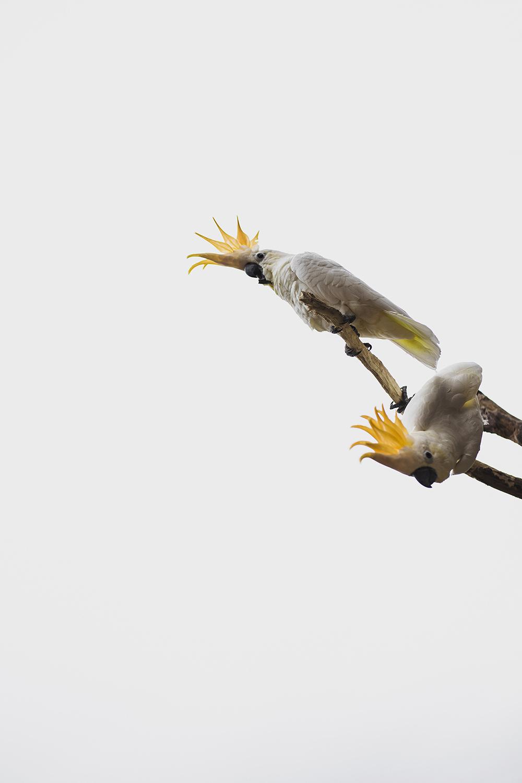 KeownPhoto.Birds-18.JPG