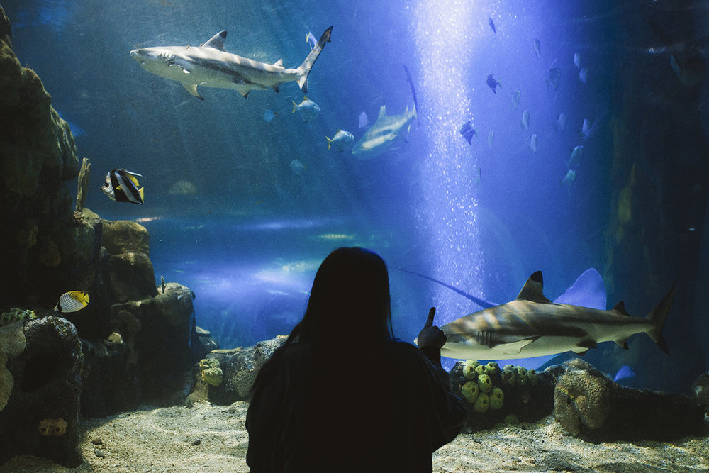 KeownPhoto.Shark-1.JPG