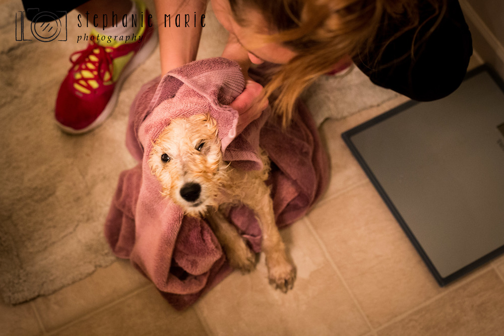 Kareaway Kennels, Goldendoodle Puppy Photography, Greater Dayton Photographer, Centerville Ohio