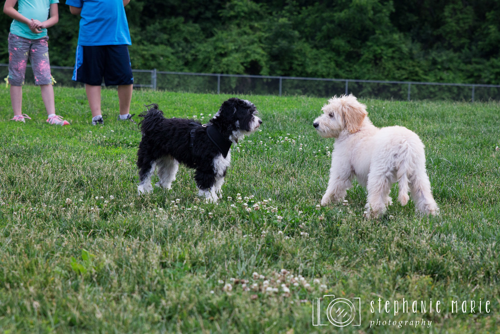 Greater Dayton Area, Oak Grove Dog Park, Dayton Photographer
