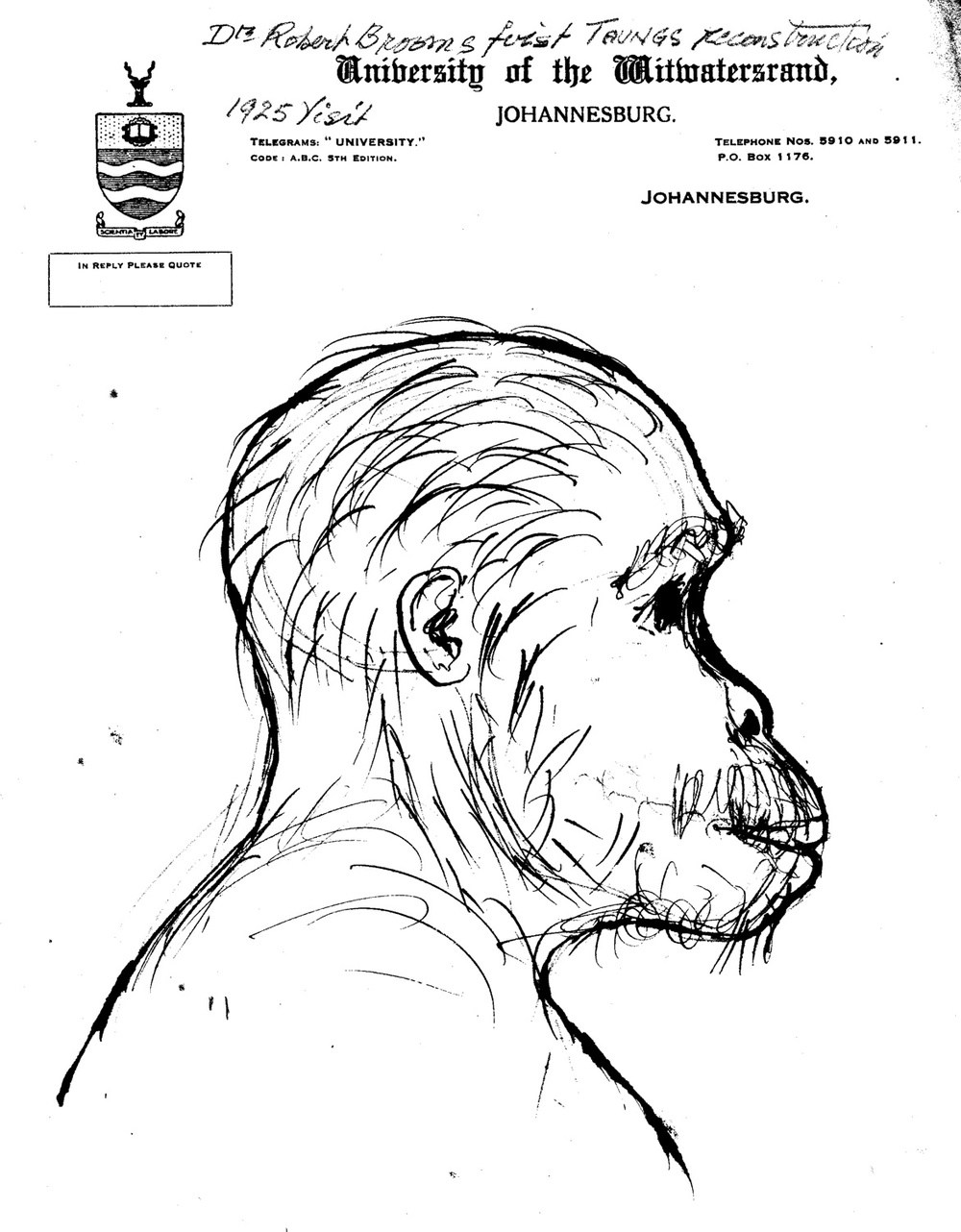Sketch of Taung Child (aged, perhaps? post-juvenile?) from Robert Broom's 1925 visit. Courtesy of the University of Witwatersrand, Raymond Dart archive. (photo: L. Pyne)