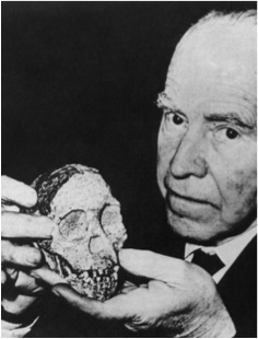 """Australopithecus"" (the Taung Child) with its Raymond Dart.  Raymond Dart Archive, courtesy of the University of Witwatersrand."