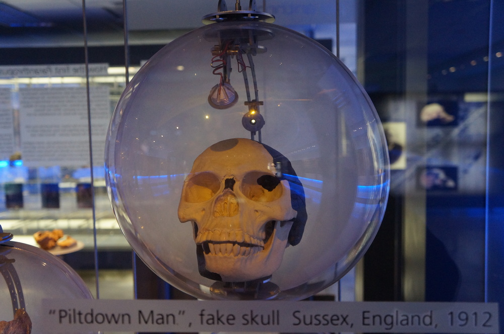 "The ""Piltdown Man"" cast on display at Sterkfontein Cave Museum & Visitor Center, South Africa.  (Photo: L. Pyne)"