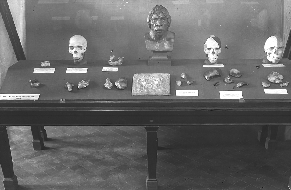 Piltdown in AMNH case