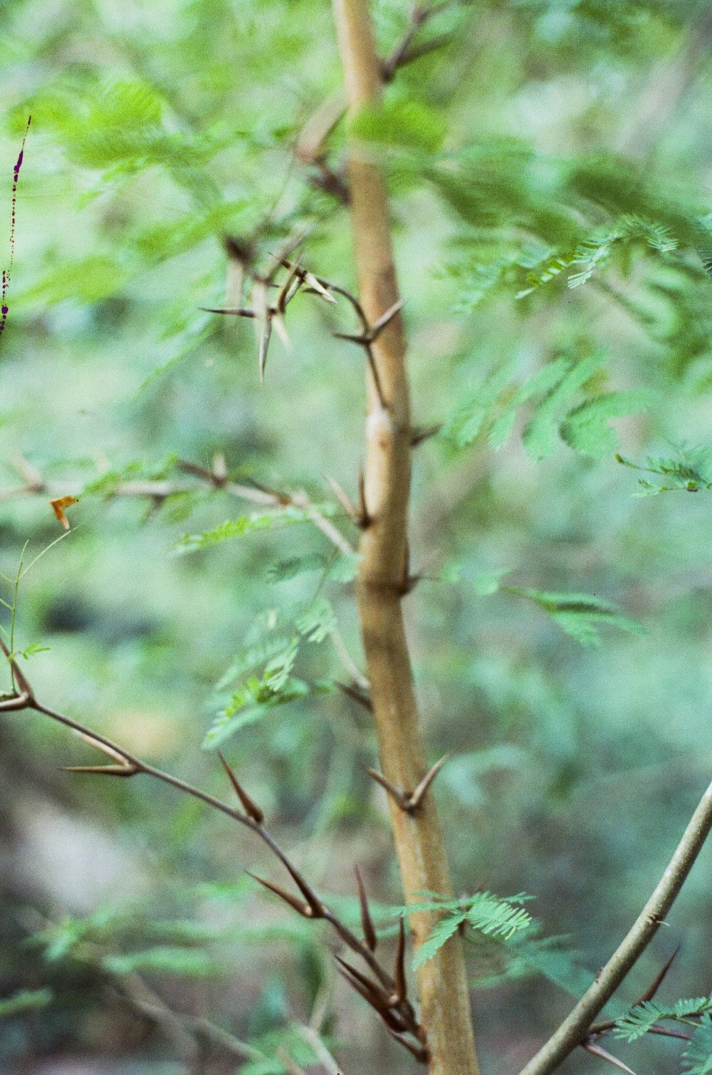 Thorns-1.jpg
