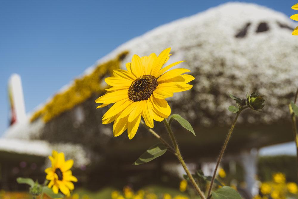 FlowerGarden-2.jpg