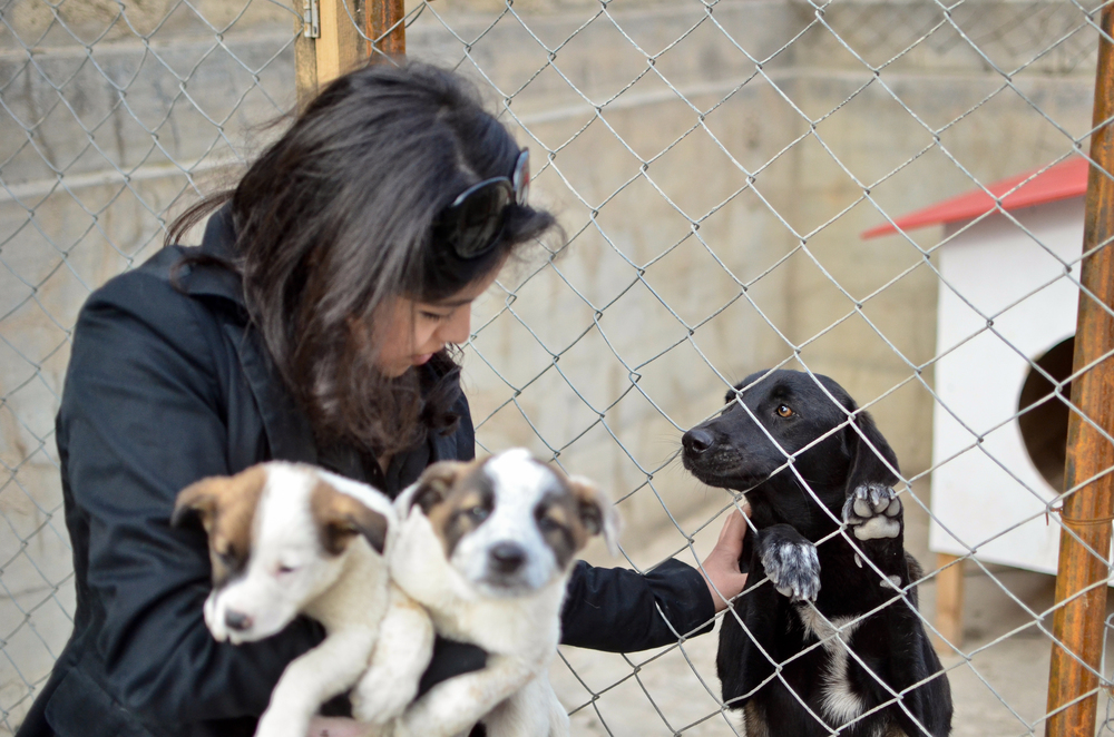 Leyla Akhundova bring the rescued puppies to the temporary shelter in Mashtaga.