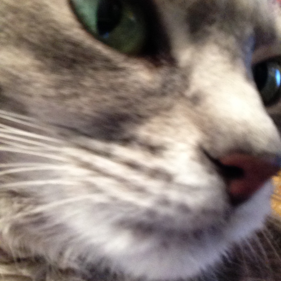 Cat selfie.