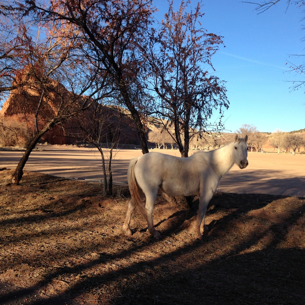 Our welcome committee at Red Rock. The park hosts rodeos and some horses stayed around :)