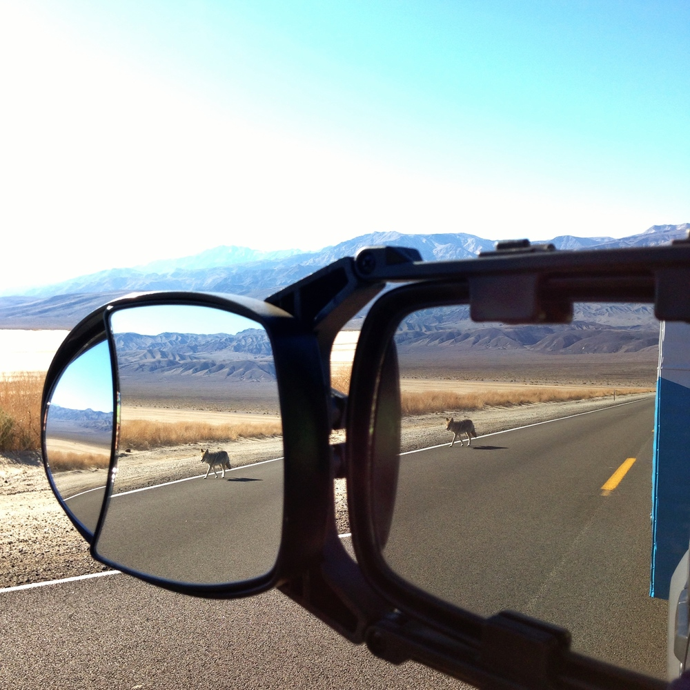 We have this rear view mirror contraption so that we can see traffic & Timmy....and watch for Coyotes.