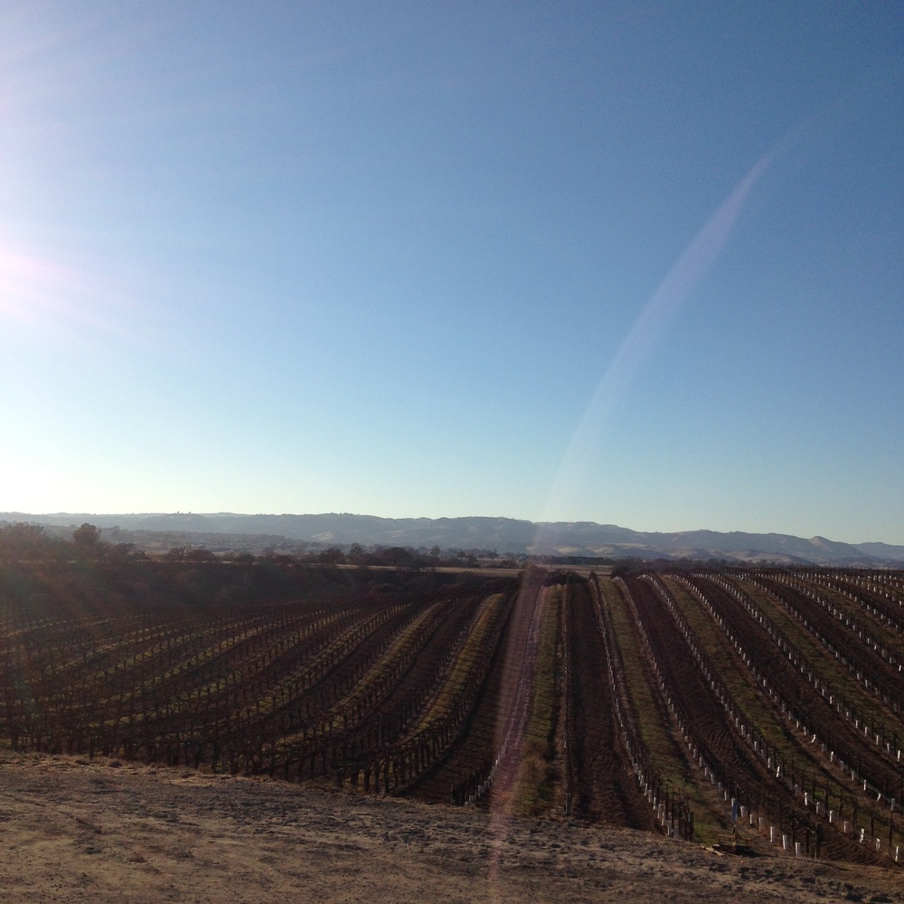 Paso Robles is beautiful in the winter. And they have wine.
