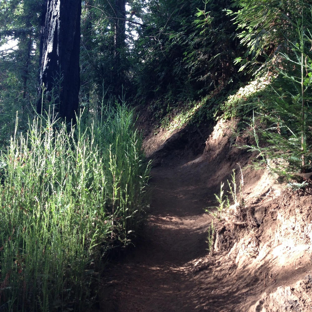 Another hike in the redwoods.