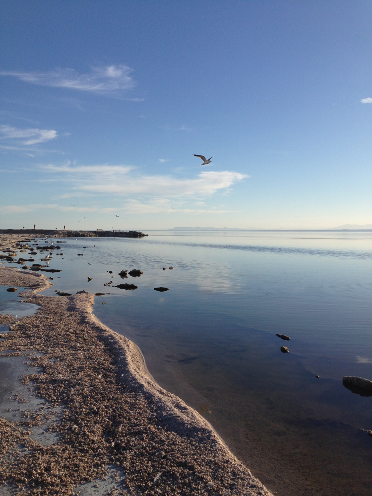 """Our first stop was Salton Sea. Or as I like to call it, God's Puddle. It has a very high salt level and the only fish surviving in the """"sea"""" is Tilapia. From far away it's beautiful....from up close it's still beautiful but the dead fish carcasses are more apparent."""