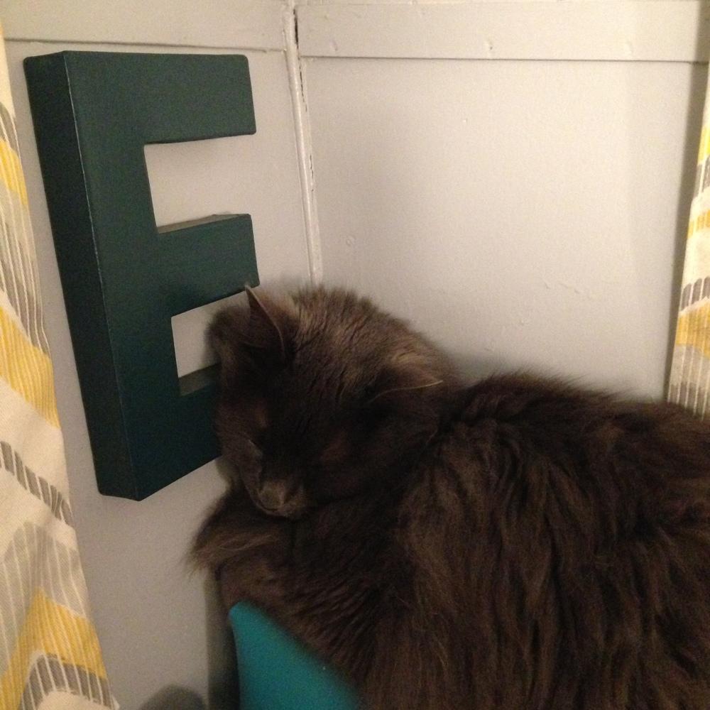 These cats sleep everywhere.